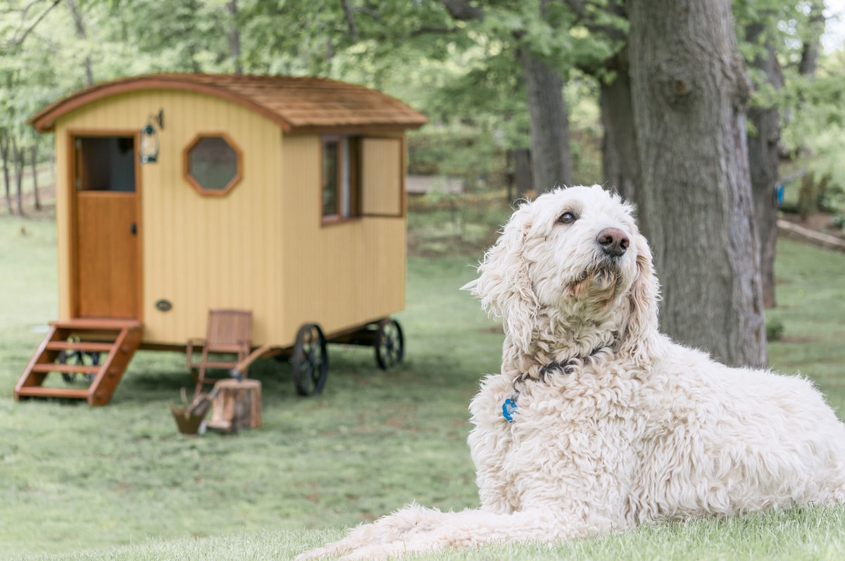 a gute shepherd hut in a backyard with a dog in the foreground