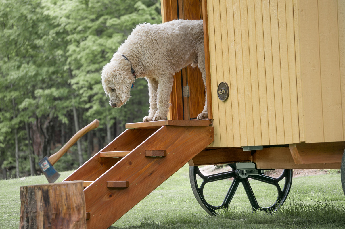 the entrance of a mobile gute shepherd hut with a dog peaking out